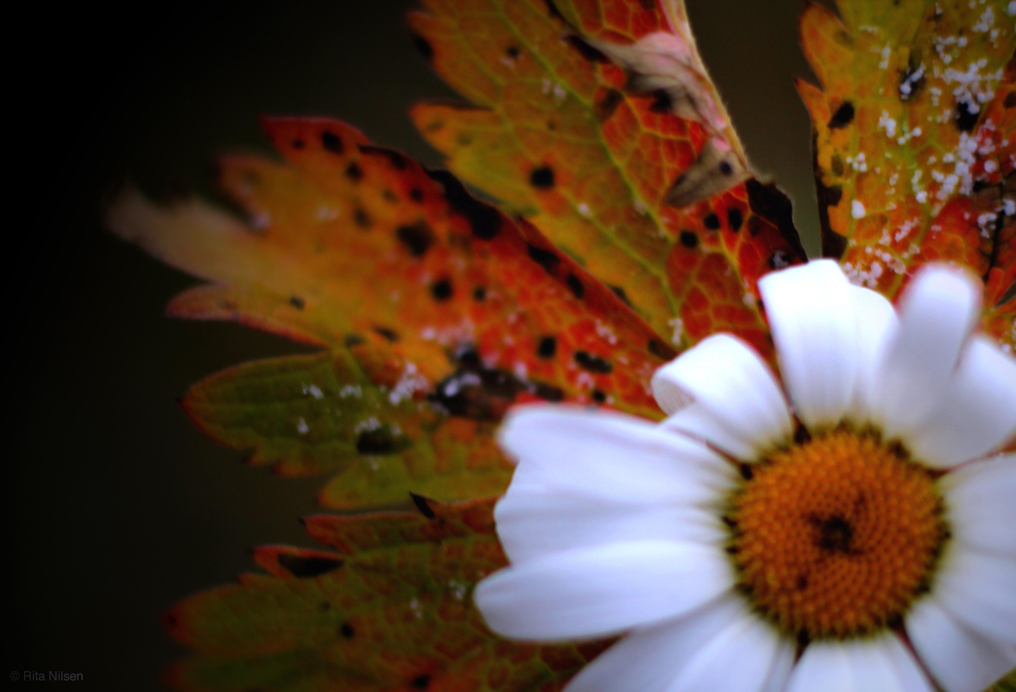 Sommer, høst, vinter